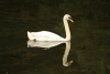 Why Internet Sites Are LIke SwansSwan